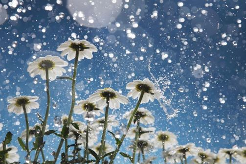 Rain-Image-Backgrounds-5k9wi-Free.jpeg