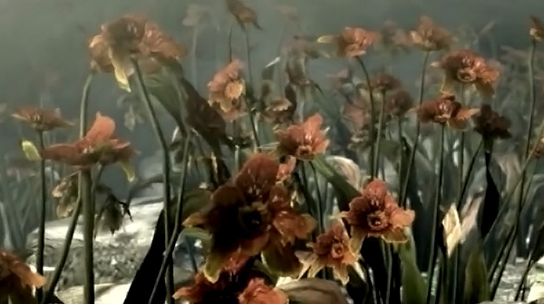 flower_yt.jpg